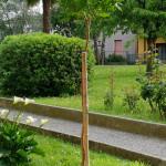 trilocale-affitto-vimercate-62